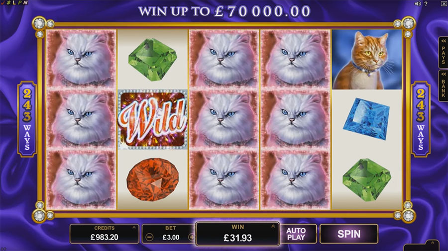видеослот Microgaming - Pretty Kitty, картинка
